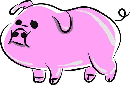 Pink fat pig, illustration, vector on white background.