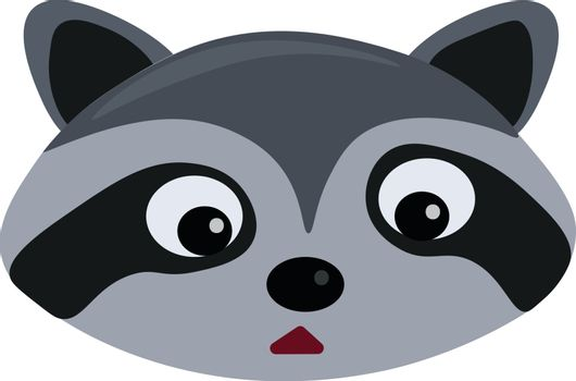 Racoons head, illustration, vector on white background.