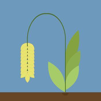 Grain, illustration, vector on white background.