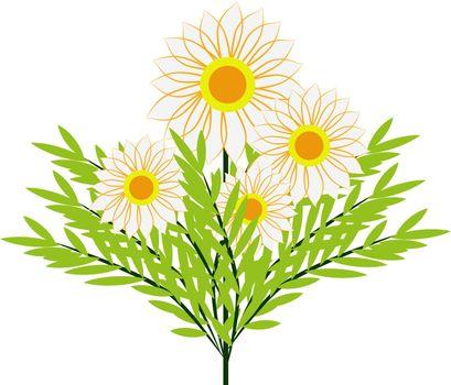 White flowers, illustration, vector on white background.