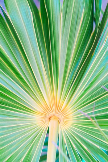 Lines and textures of green palm leaves at exoric island