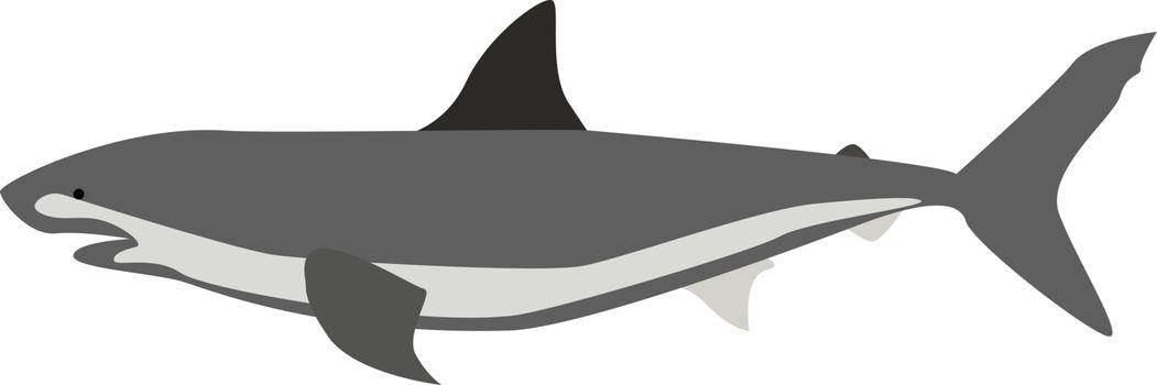 Shark, illustration, vector on white background.
