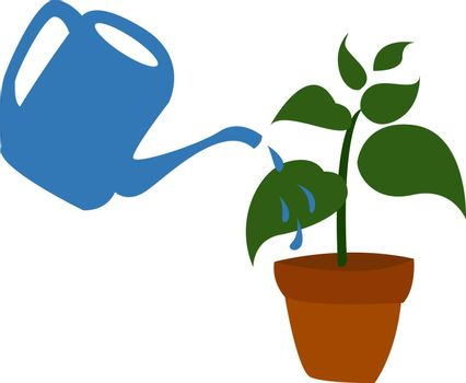 Watering plant, illustration, vector on white background.