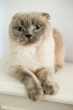 pet cat at home. Love between kid and pet
