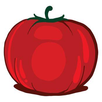 Red fresh tomato , illustration, vector on white background