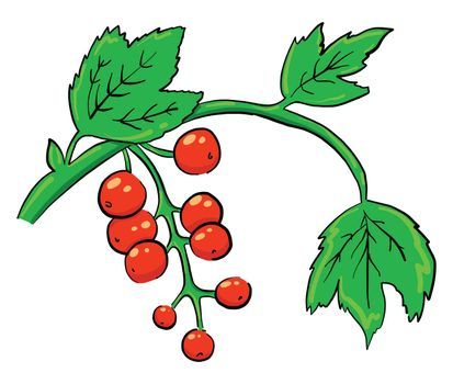Red currant , illustration, vector on white background
