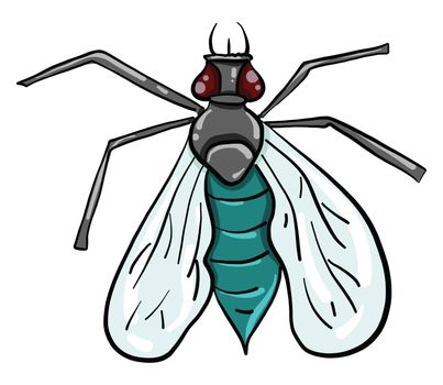 Fly insect , illustration, vector on white background