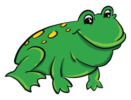 Green frog , illustration, vector on white background