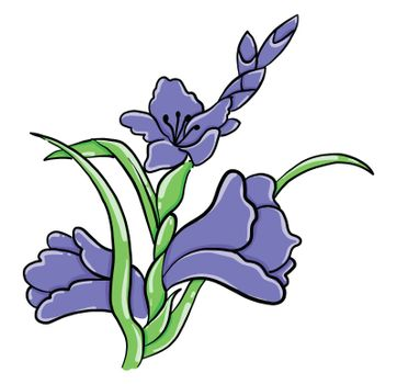 Gladiolus flower , illustration, vector on white background