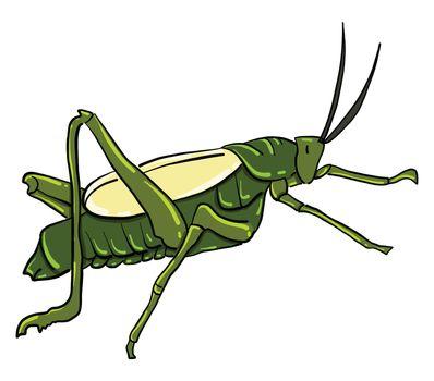 Grasshopper , illustration, vector on white background