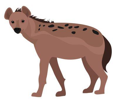 Wild hyena , illustration, vector on white background