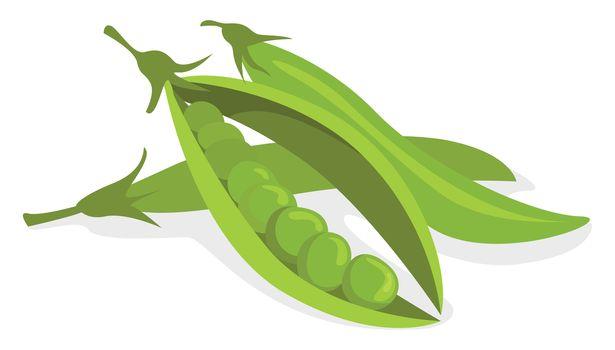 Peas beans , illustration, vector on white background
