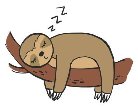 Sleeping sloth on tree , illustration, vector on white background