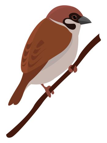 Sparrow on a branch , illustration, vector on white background