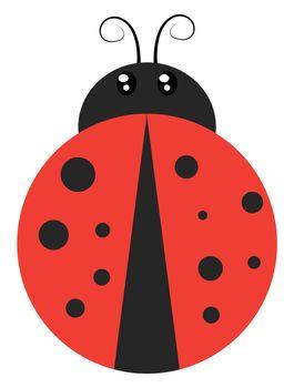 Ladybug flat, illustration, vector on white background
