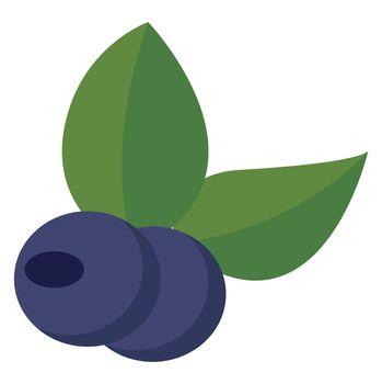 Blueberry flat, illustration, vector on white background