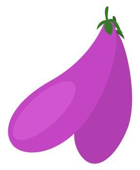 Purple eggplant, illustration, vector on white background