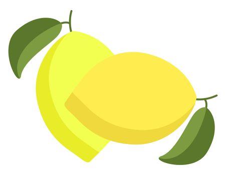 Fresh lemons, illustration, vector on white background