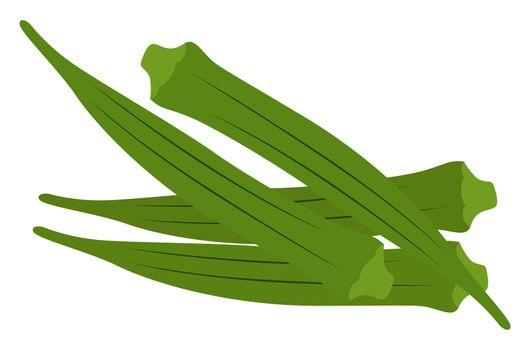 Green okra, illustration, vector on white background