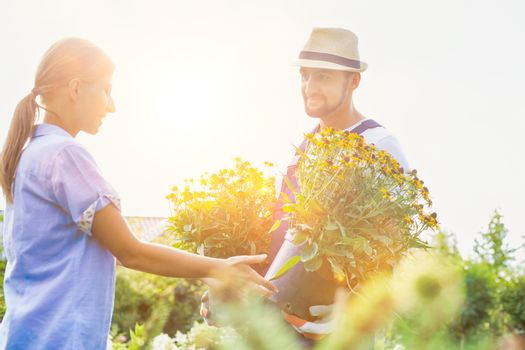 Portrait of mature gardener showing daisy flowers on pot to woman buyer in shop