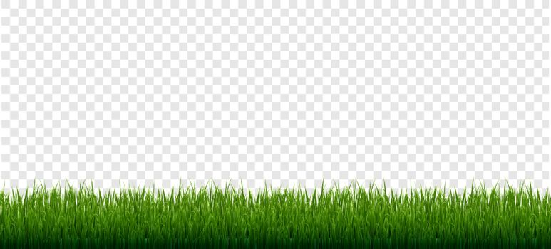 Grass Border Set Isolated Transparent Background, Vector Illustration