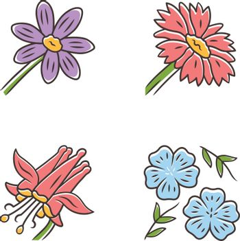 Wild flowers color icons set. Coreopsis, crimson columbine, blue flax, blanket flower. Blooming wildflowers. Spring blossom. Field, meadow herbaceous plants. Isolated vector illustrations
