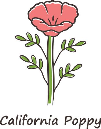 California poppy red color icon. Papaver rhoeas with name inscription. Corn rose blooming wildflower. Herbaceous plants. Field common poppy. Summer blossom. Isolated vector illustration
