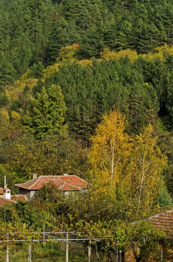 Autumnal colorful forest and houses in the town Maglizh, Balkan mountain