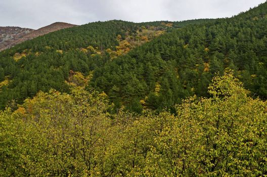 Colorful autumn   forest with coniferous and deciduous trees and glade in the Balkan mountain, near Maglizh, Bulgaria