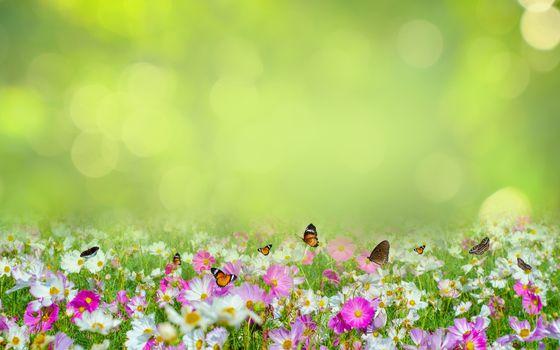 flower Leaf background bokeh blur green background
