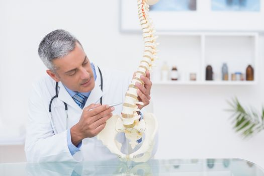 Doctor with anatomical spine