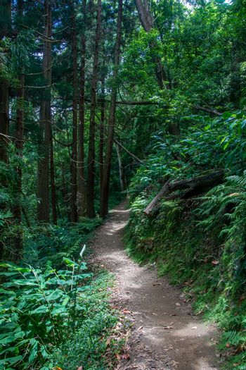 walk and discover the prego salto waterfall on the island of sao miguel, azores