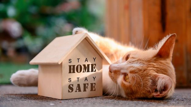 Cat with wooden house. Self-quarantine and stay home during Covid-19. Lovely pet in the garden with toy. Stay home stay safe and social distancing concept.
