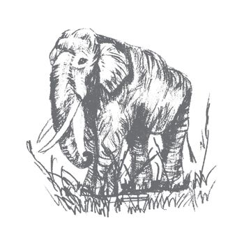 Vector engraving elephant
