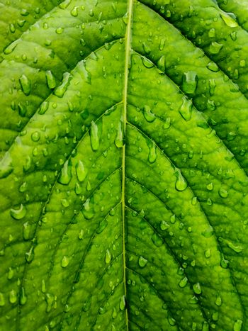 water drops on green leaf texture background