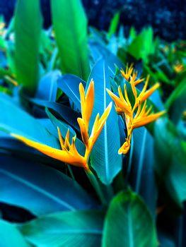 Green leaf yellow flower in the garden
