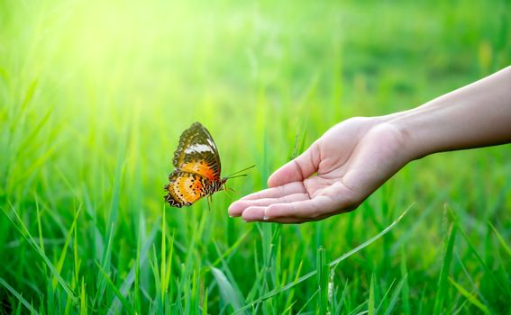 A butterfly is flying on the hand of a woman in a lush meadow.