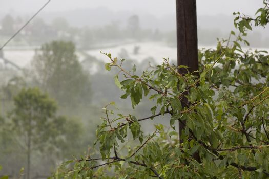 Hail Storm Disaster on fruit tree