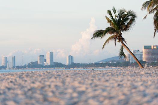 Plam tree on the beach
