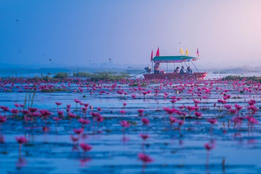 UDON THANI,Thailand - January 3 ,2016 : Boat driver in Red Lotus Sea UdonThani, Amazing Thailand