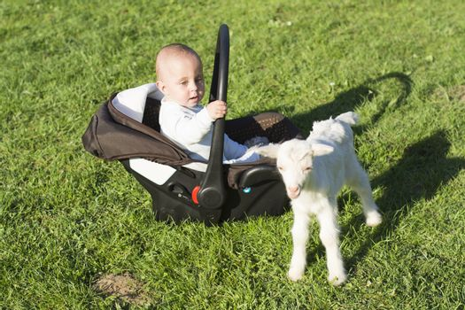 Baby in the car seat and little goat on grass playing