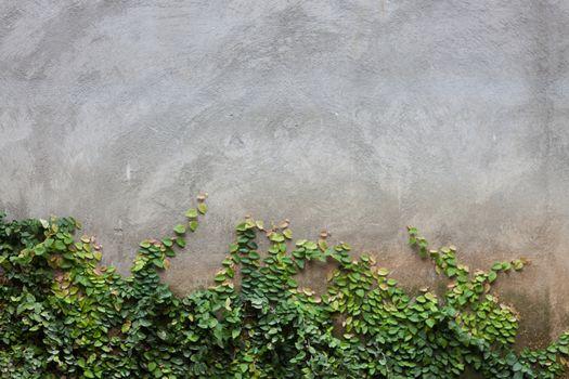 Green leaf on brick wall, stock photo