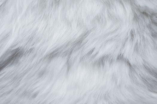 Closeup of White Fur Texture. Smooth Fluffy and Silky Background