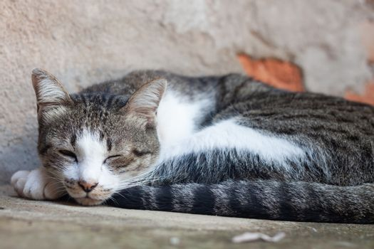 Thai cat sleeping in garden home, stock photo