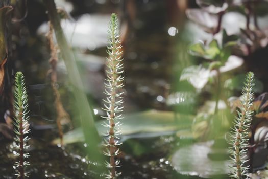 Close up Beautiful aquatic plants in garden pond