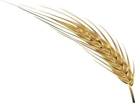 Spica of wheat vector illustration isolated on a white background