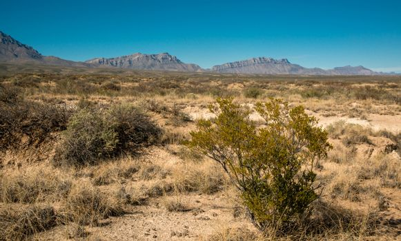 New Mexico desert landscape, high mountains in the background