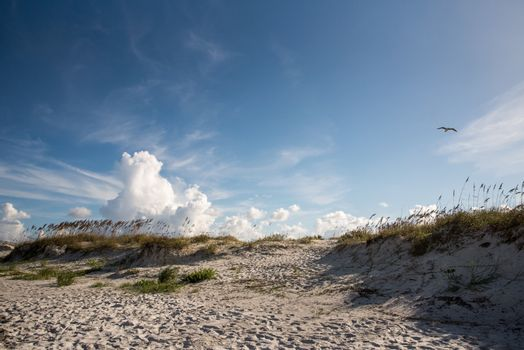 Clouds and sea oats on the beach