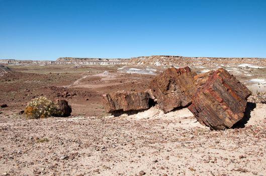 Petreified logs in the desert