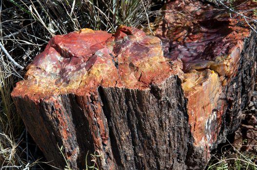 Petriifiied stump
